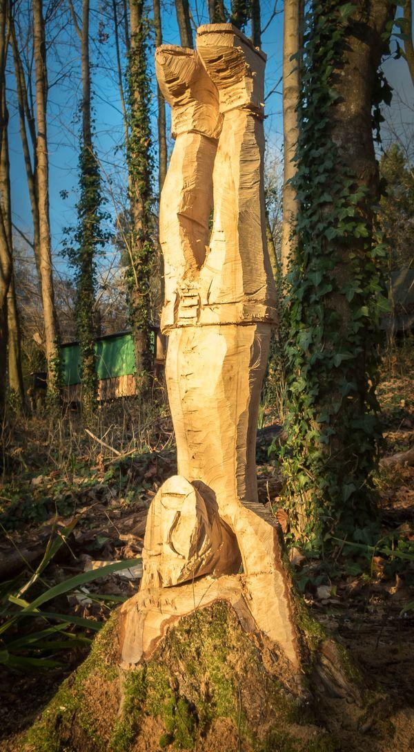 Tree felling-240230