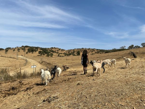 Lucky me and the Goats ! Santa Cruz Rural Portugal.