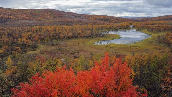 Autumn colors in the wilderness