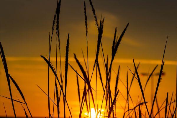 Sunset Through Straws