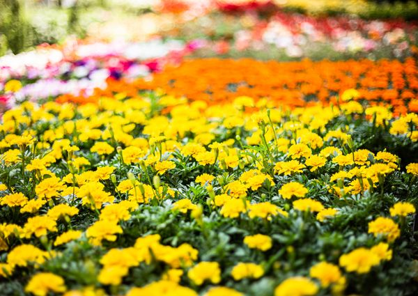 Sooo Many Flowers