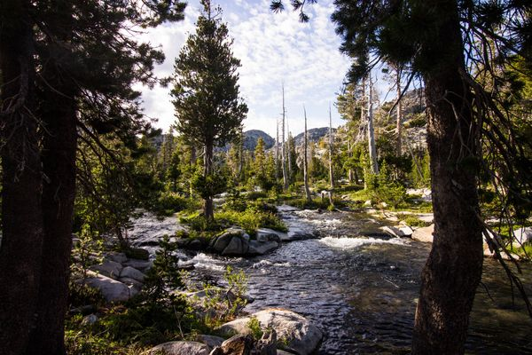River and Trees in Tahoe
