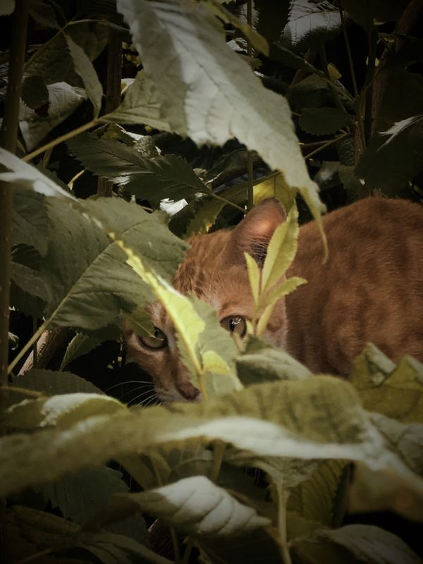 CAT BEHIND THE TREE