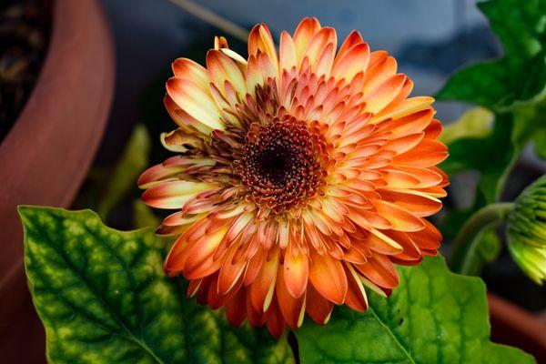 Fire color flower.