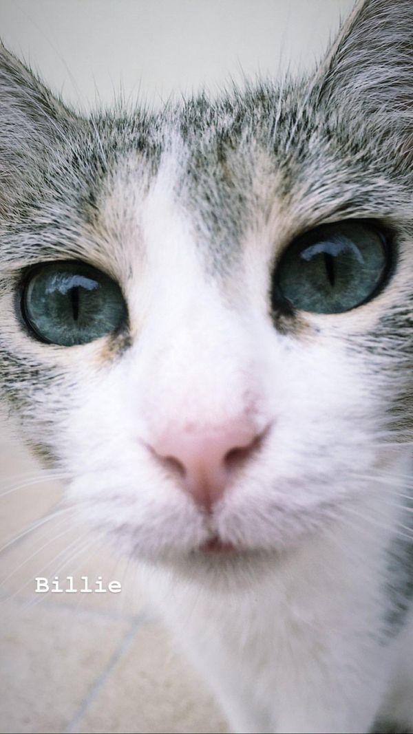 The beautiful ice blue eyes of my kitten