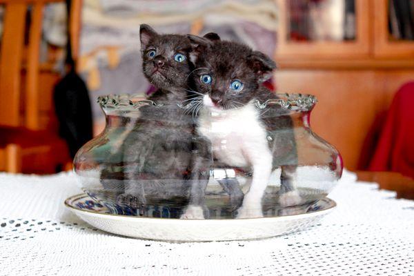 Kittens in the vase