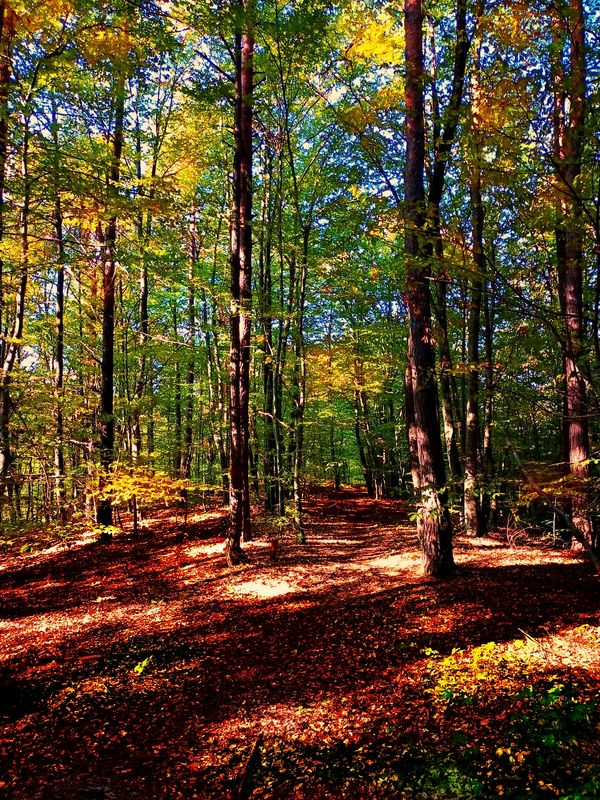 Magic forest 1 (1)