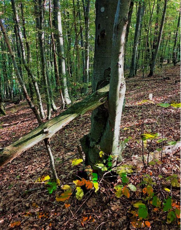 Magic forest 1 (2)