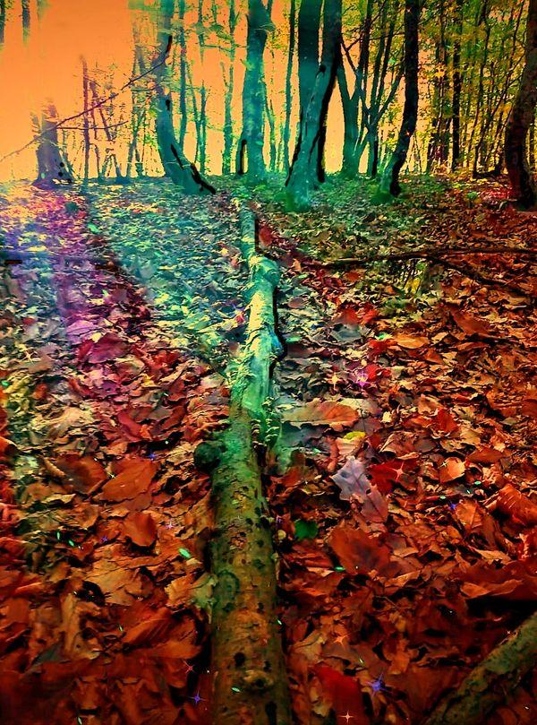 Magic forest 1 (3)