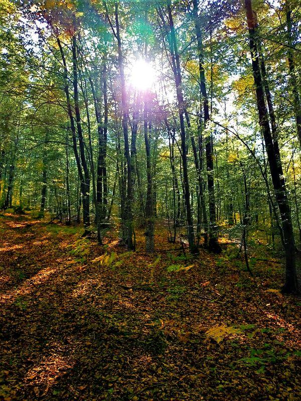 Magic forest 1 (4)