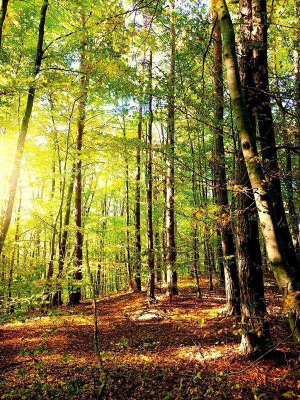 Magic forest 1 (5)