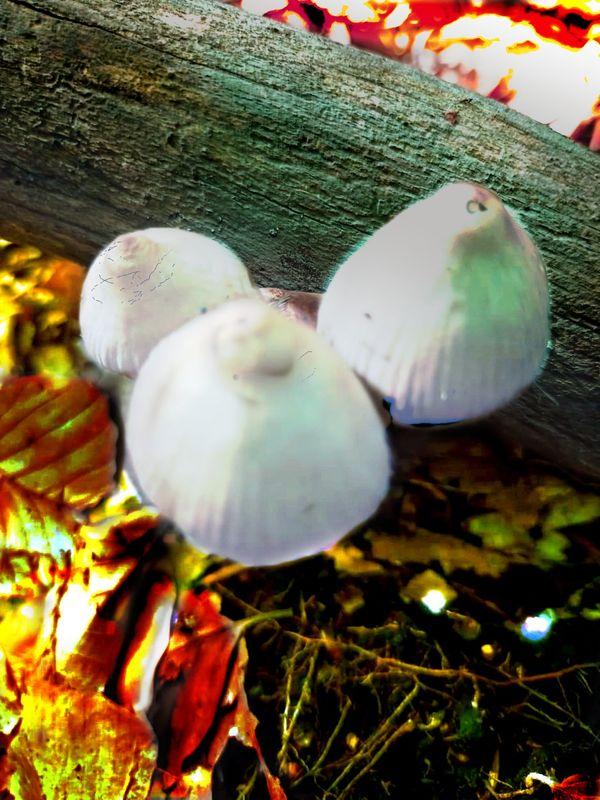 Moshrooms 1 (6)
