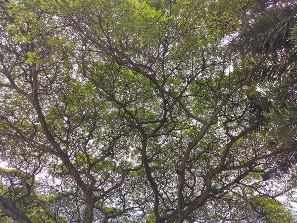 Nature, naturaleza613