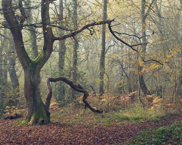 Soft light in autumn woodland