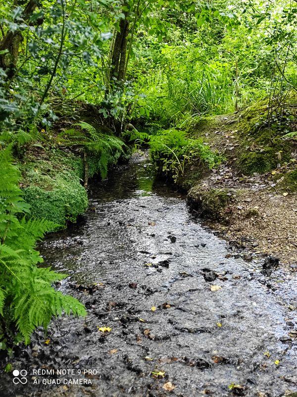 Stream under the foot path