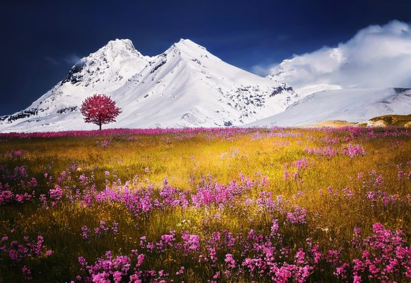 Snow-capped mountains and sea of flowers