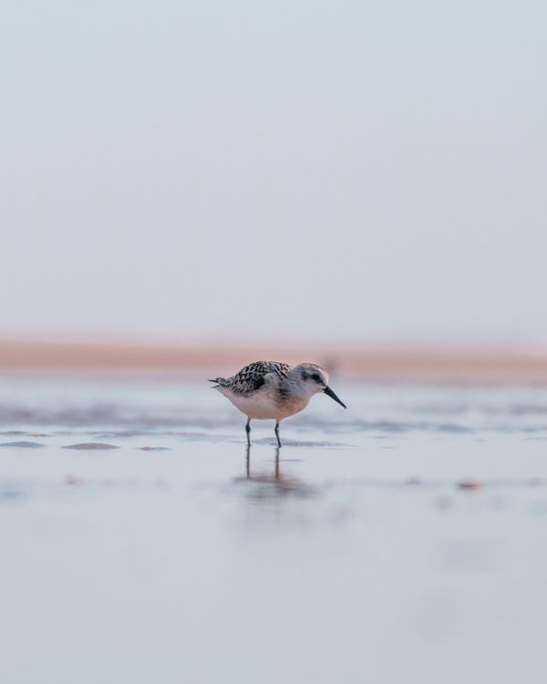 Birdy miry