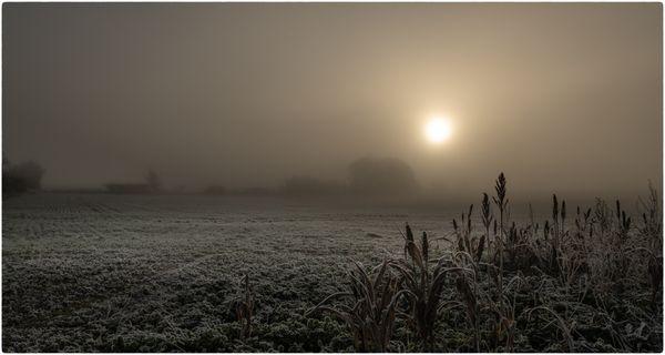 Winter Morning 2