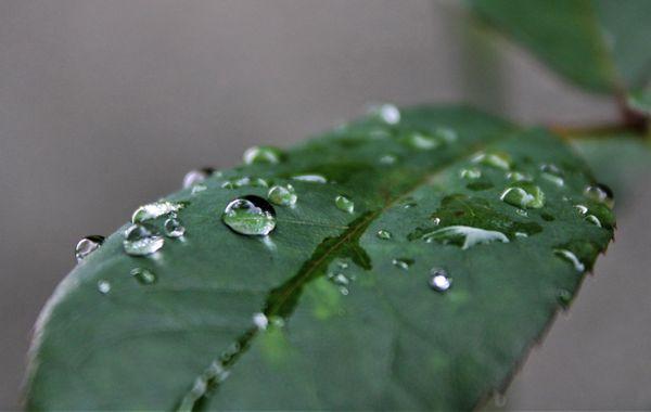 Rain droplet
