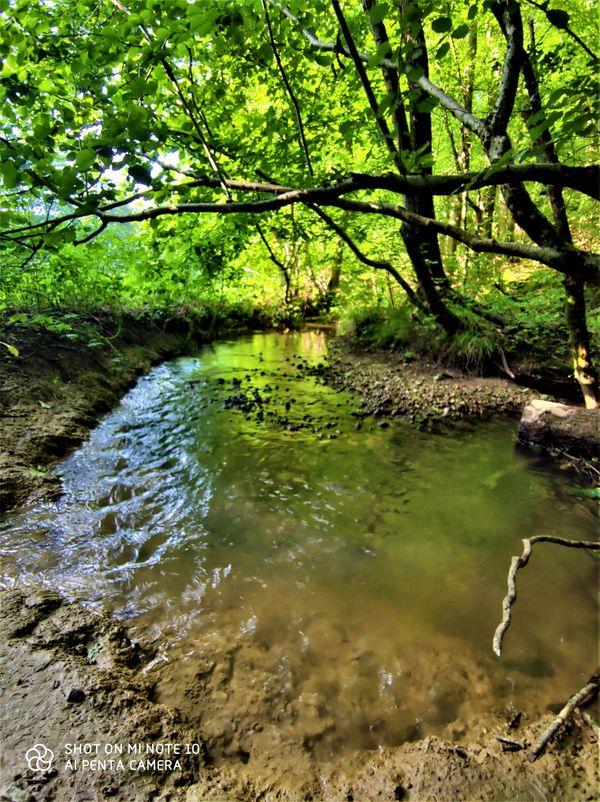 Stream, Golnik Slovenia
