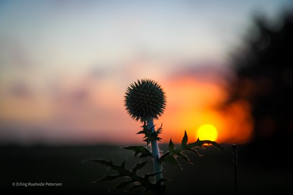 The sunset and the flower sculpture