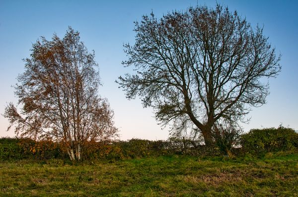 Autumn Trees On Leckhampton Hill