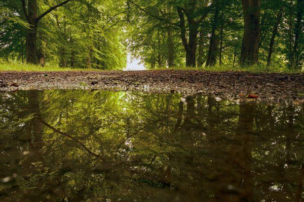 Woodland Reflection