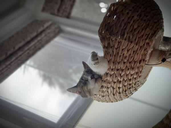 Saturday kitty snoozing