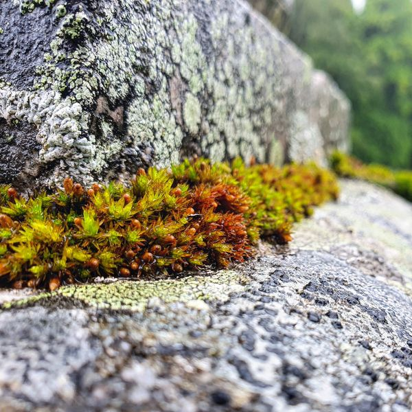 Moss covered stairs