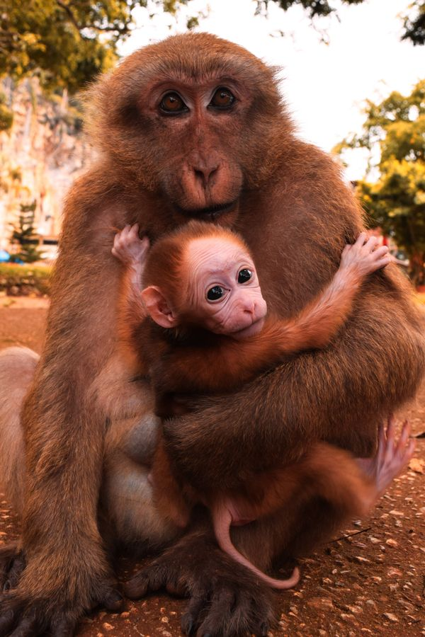 Monkey carrying its baby
