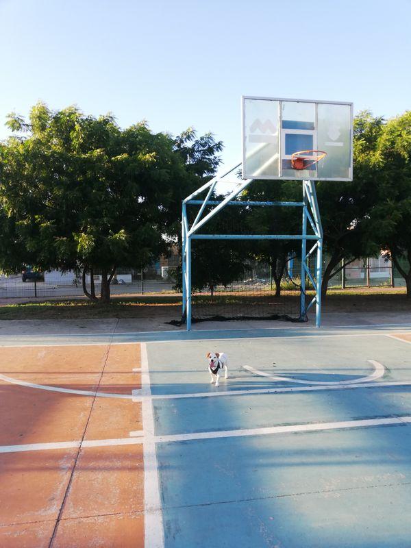 Cancha de basquetball