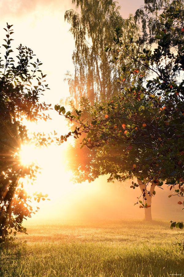 Morning light in my garden.