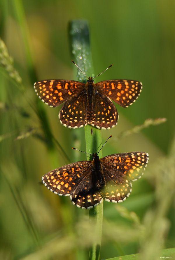 Summer and Butterflies.