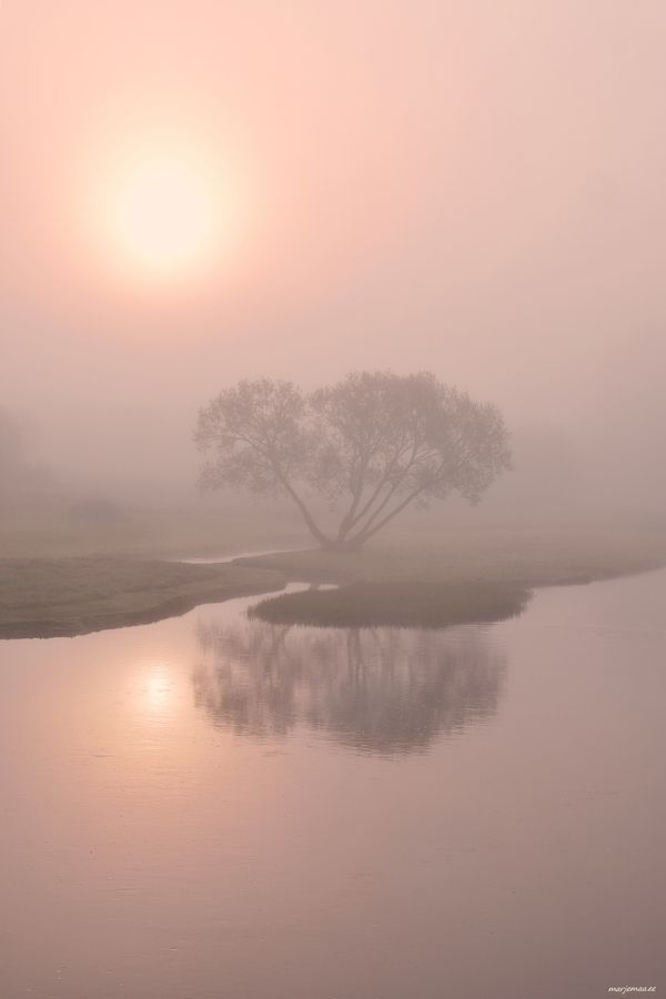 A lone tree in the morning fog.
