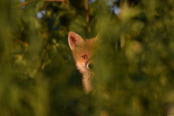Little cute peeper.