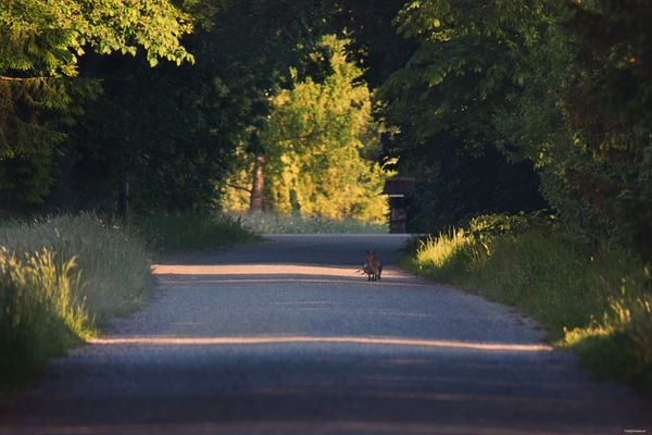 In the morning on the village road.
