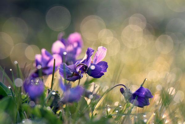 Morning Flowers.
