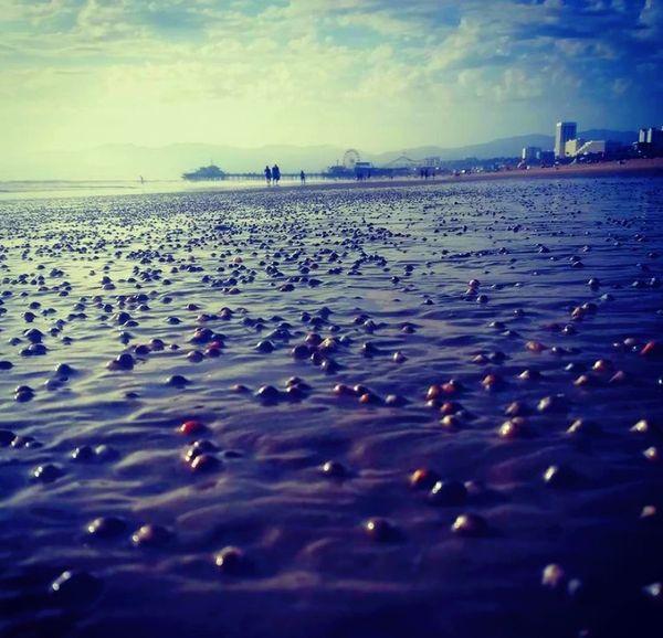 Clams on Venice beach