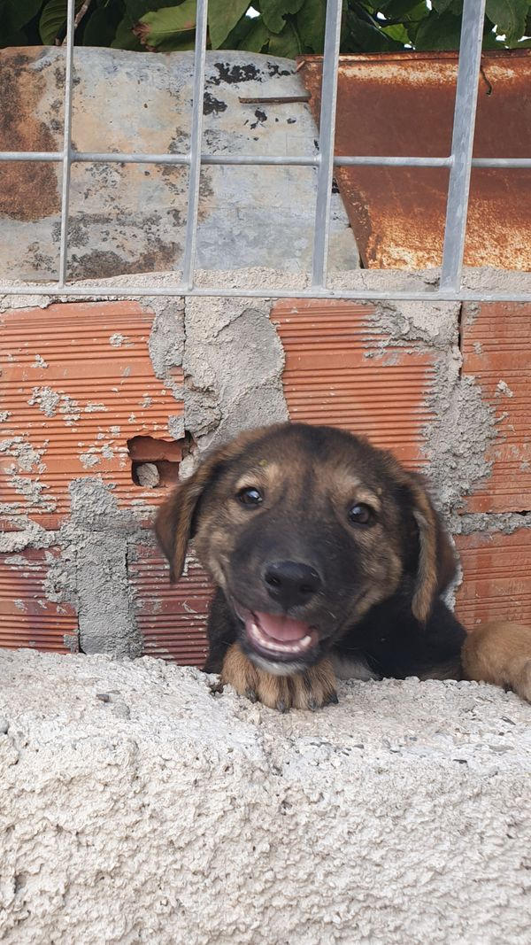 Pupper is a Good Boy