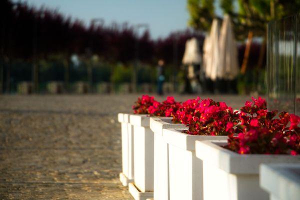 Arona, flowers along the promenade
