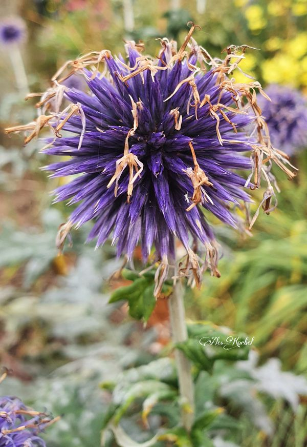 Nice purple color