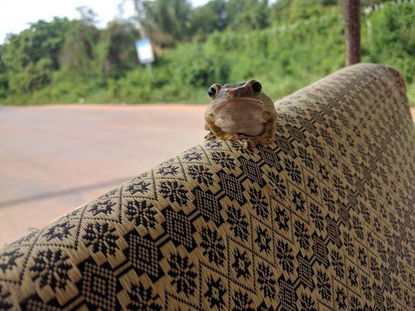 Theres a frog on my tuk tuk