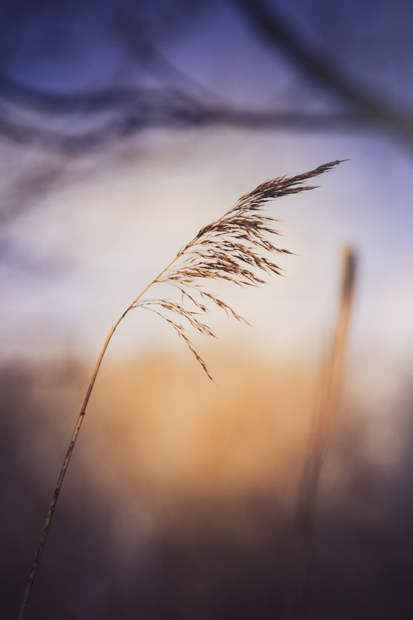Grass in the sunlight