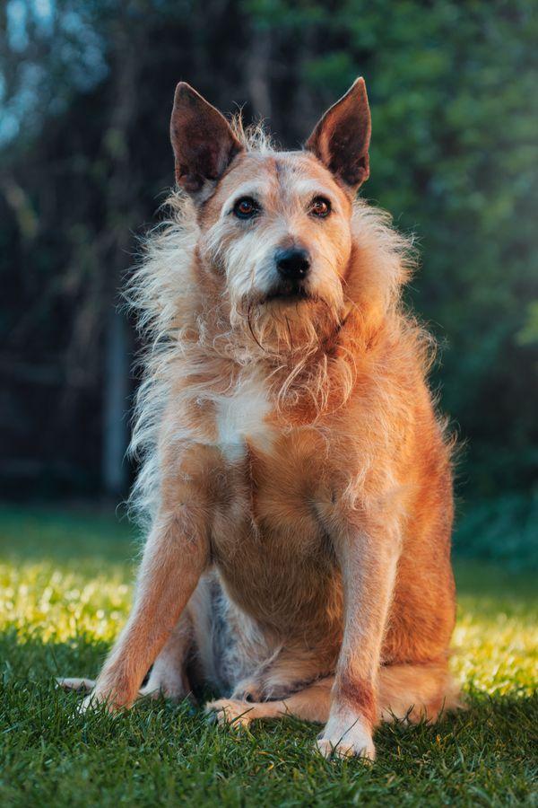 Max portrait in the garden