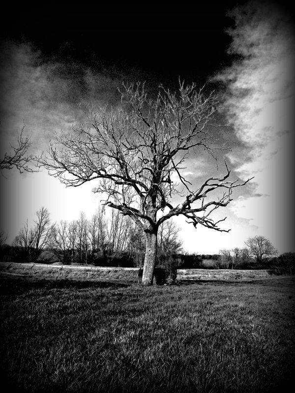 Tree in mono