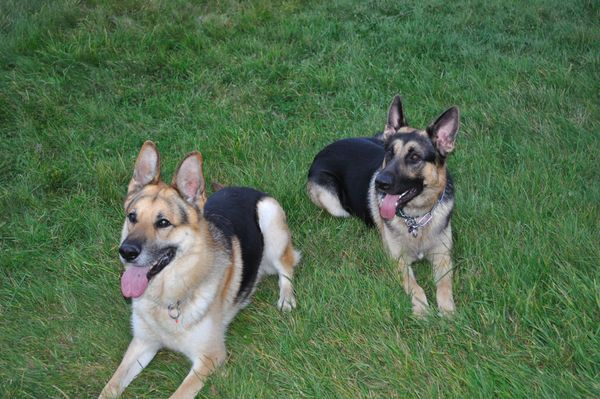 Bailey and Zeus