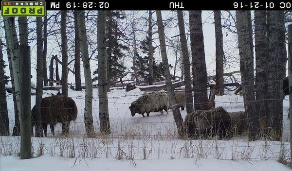 Trail Cam Critters