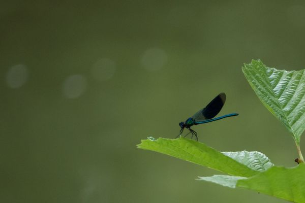 Little dragonfly (3)