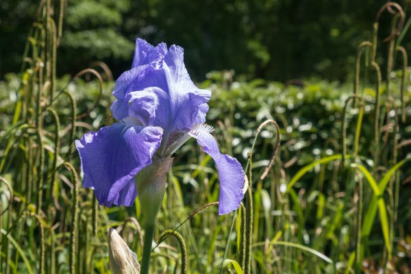 Flower form Honfleur park