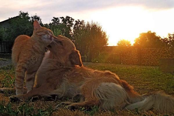 Mascho & Becks at dawn
